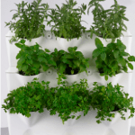 Minigarden, una forma de jardín vertical original 3
