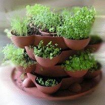 Plantas para tu cocina