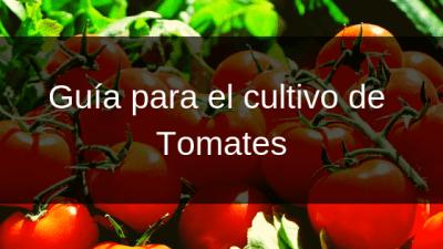 Guía para el cultivo de Tomates