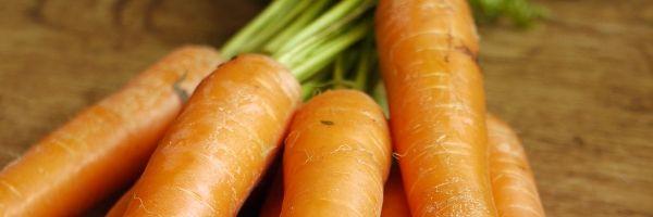 plantar zanahorias