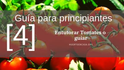 Guía para principiantes_ Entutorar Tomates o guiar [4]