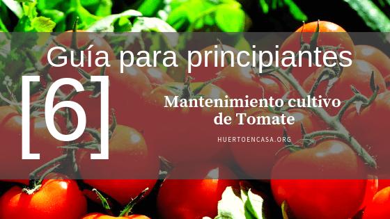 Guía para principiantes_ Mantenimiento cultivo de Tomate
