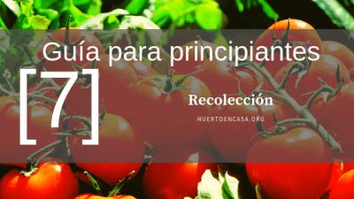 Guía para el cultivo de Tomates_ Recolección [7]