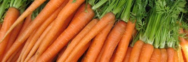 Zanahoria como