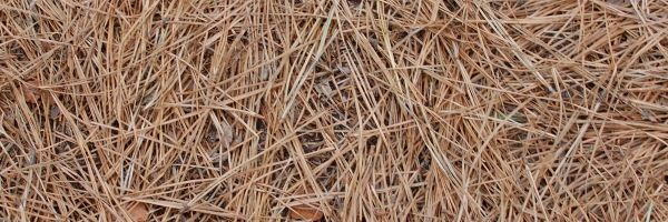 Mulching o acolchado ¿Que es y para que se utiliza? 1