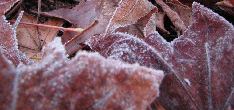 Cómo mejorar nuestro Huerto en invierno 1
