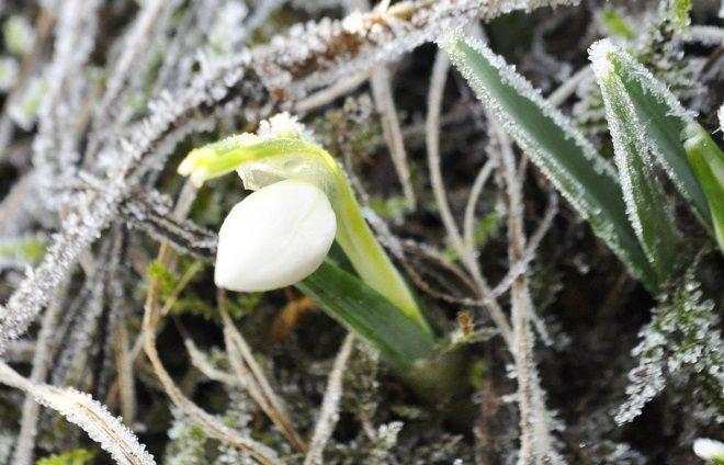 huerto en invierno
