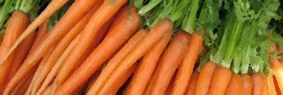 Zanahoria sin