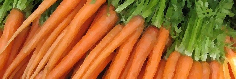 Plantar Zanahorias Sin Semillas Un Experimento Porque siempre utilizamos zanahorias en la cocina y qué mejor que cultivarlas en casa. plantar zanahorias sin semillas un