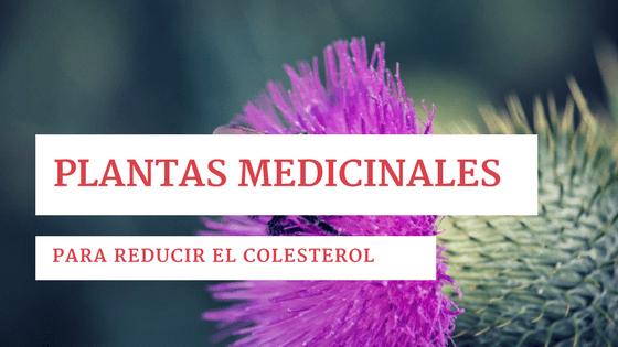 plantas medicinales reducir colesterol