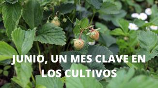 Junio, un mes clave en los cultivos