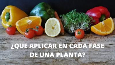 ¿Qué productos aplicar al cultivo según su etapa de crecimiento?