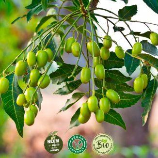 Aceite de Neem para la protección de las plantas contra diversas adversidades 2