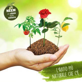 Aceite de Neem para la protección de las plantas contra diversas adversidades 1