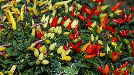 ¿Qué productos aplicar al cultivo según su etapa de crecimiento? 4