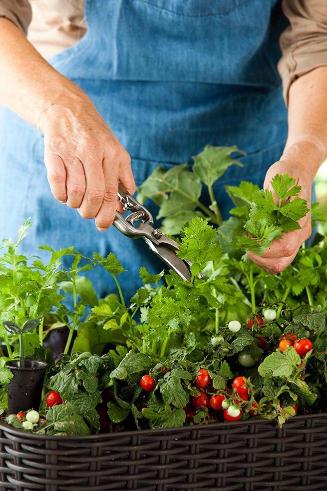 Keter - Mini huerto en casa Easy Grow con depósito de agua 5