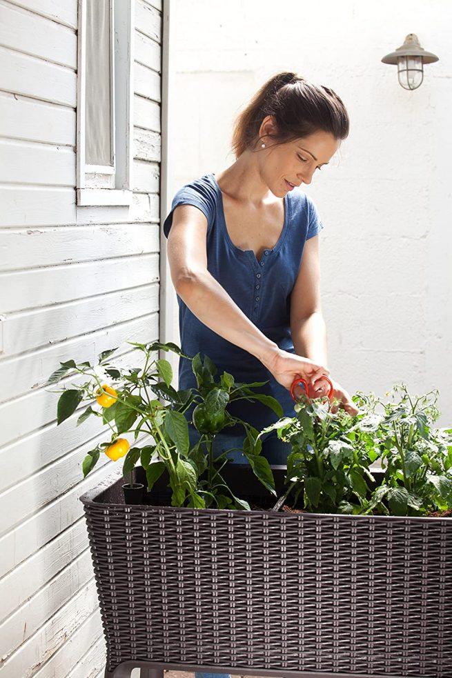 Keter - Mini huerto en casa Easy Grow con depósito de agua 8