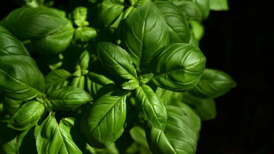 5 plantas para ahuyentar mosquitos y moscas 1