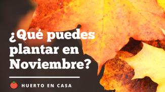 ¿Qué puedes plantar en Noviembre_