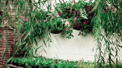 plantas colgantes decoración casa y jardin