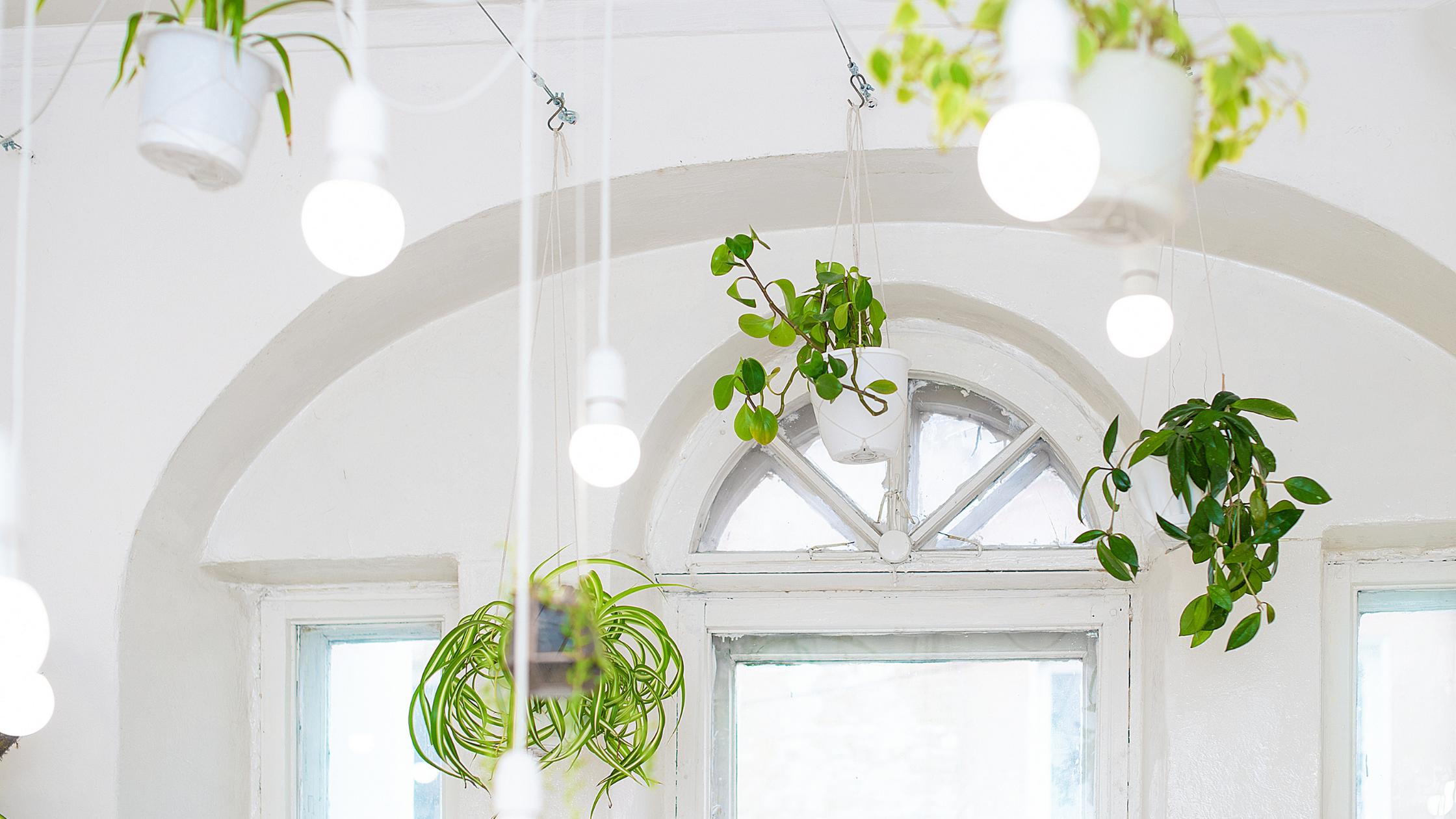Las plantas colgantes: ideal para decorar tu hogar 4