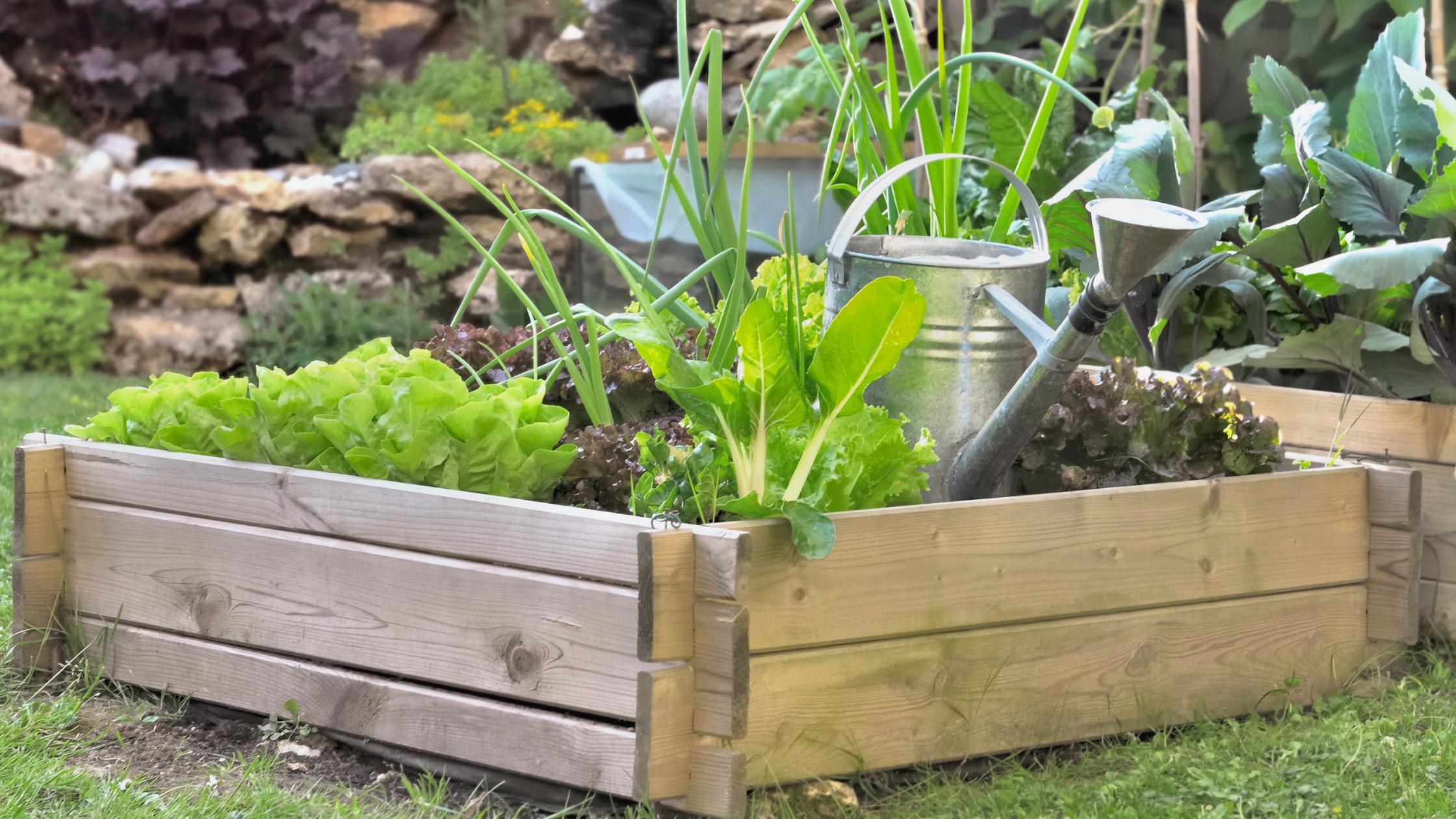 Los mejores fertilizantes naturales para tu huerto ecológico