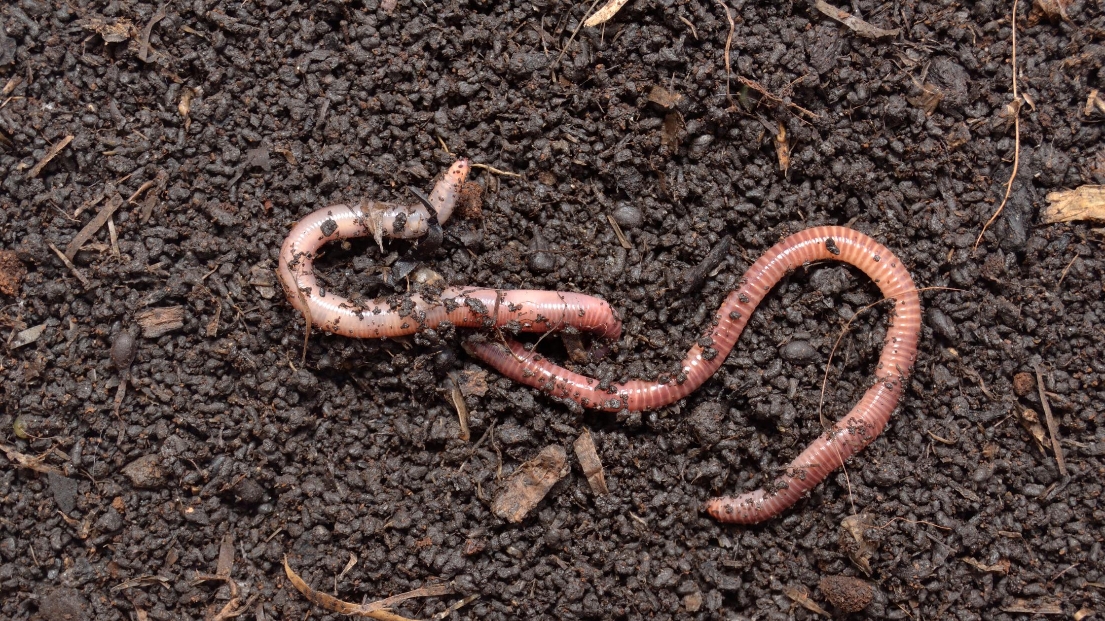 Los mejores fertilizantes naturales para tu huerto ecológico 2