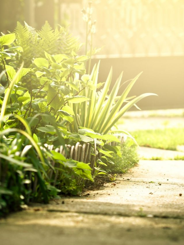 Cuidados del Jardín en Mayo