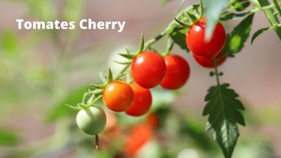 macetas para tomates cherry